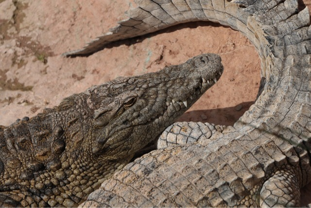 reptile-wallet-care-1