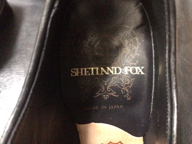 shetland-fox-winston-1