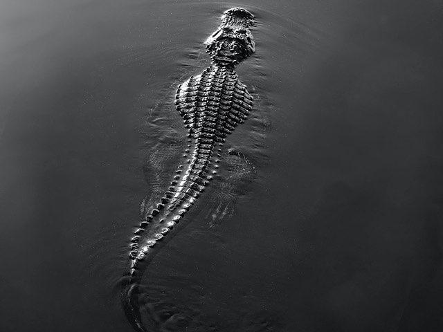 crocodile-leather-charm-13
