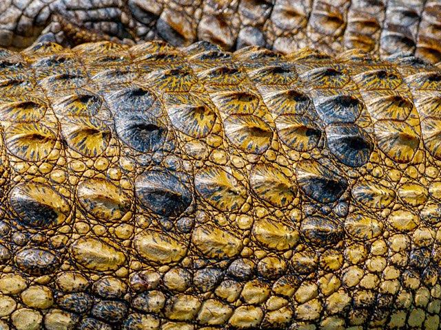 crocodile-leather-charm-9